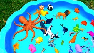 Learn Colors With Animals and Sea Animal Shark Toys in Blue Water Tub Toys For Kids