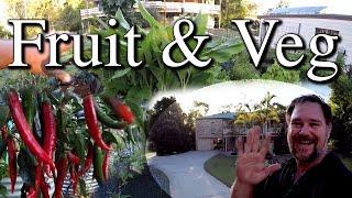 Fast Walk Around Fruit Vegetable Gardens