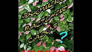 Вьющиеся растения садов. КАК выбрать лучшее?(, 2014-04-16T18:53:07.000Z)