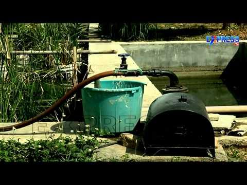 Natural Farming by Scientist Syam Sundar Reddy in IIIT Campus Hyderabad  : Paadi Pantalu
