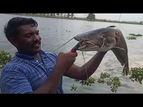 അമ്പോ ആറ്റുവാളയും രോഹുവും ആയൊരു മൽപ്പിടുത്തം |kerala river fishing|Happy companion too