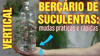 BERÇÁRIO vertical de SUCULENTAS em GARRAFA PET – DIY
