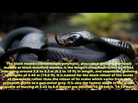 top-10-venomous-snakes-on-earth