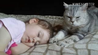 Cat and baby. Ребенок и кот. Дети и кошки. Колыбельная кота.