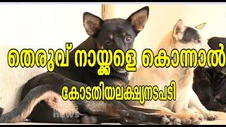 Killing of stray dog