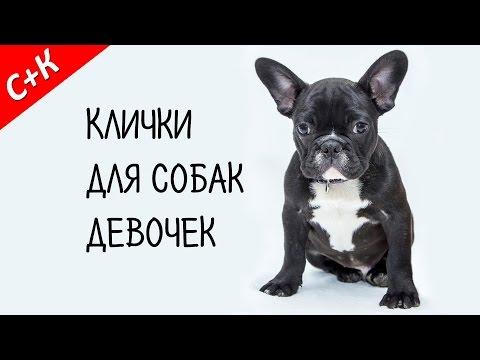 Как назвать большую собаку девочку