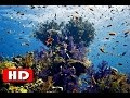 Red Sea Coral Reef - Amazing World Under The Red Sea - History Channel HD
