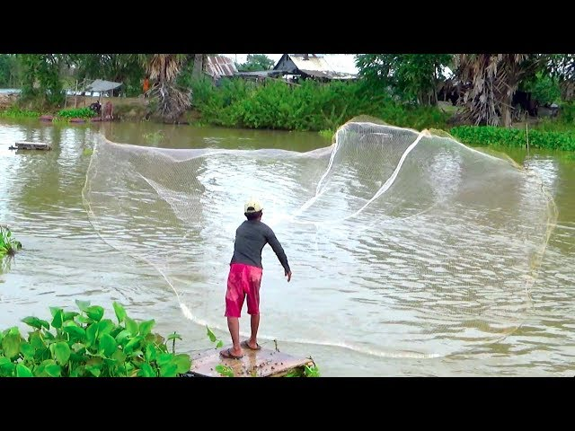 We casts net to catch the first Tilapia