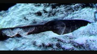 Scorpene DCNS promotional video