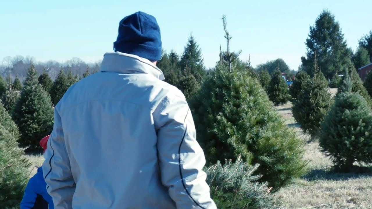 cutting a tree with family at middleburg christmas tree farm in virginia 2 - Middleburg Christmas Tree Farm