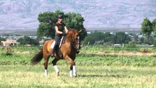 Red Adair  2015 SWB gelding for sale