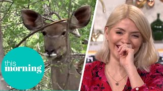Holly Labelled 'Attenborough' as she Compares South African Animal to Shrek   This Morning