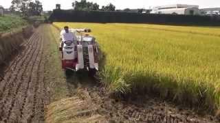営農組合のヤンマーコンバインGC223vで稲刈りをしました! 家のヤンマ...