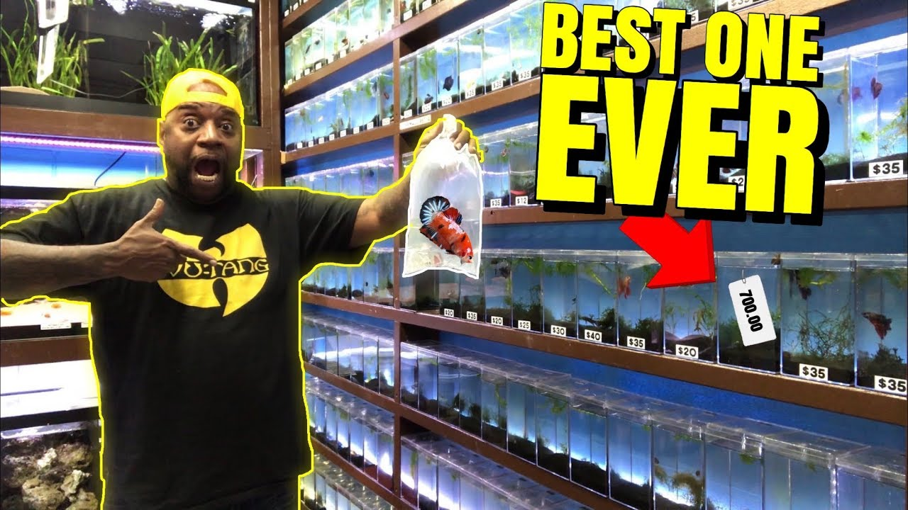 Buying the MOST EXPENSIVE BETTA FISH from EXOTIC FISH store.