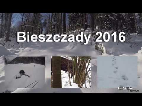 Bieszczady: looking for wildlife - European Bison (Poland - 2016)