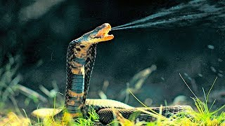 STAY AWAY From These 7 Devastating Snakes!