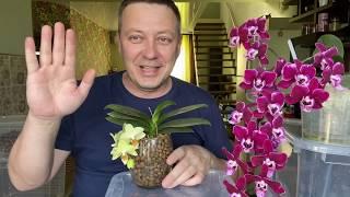 пересадка орхидеи в керамзит ЗАКРЫТАЯ СИСТЕМА