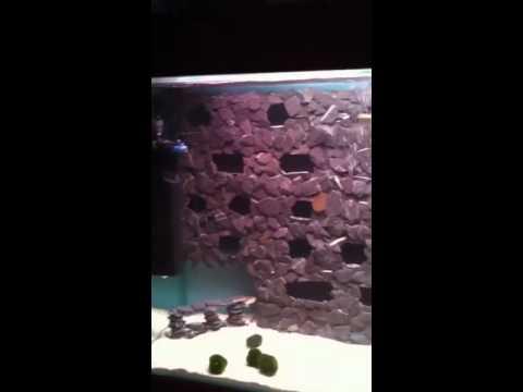 Malawi cichlid tank 3d diy slate background - YouTube