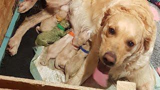 Собака родила очень редкого щенка, которых в мире было всего 4