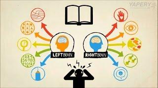 Não trái và não phải - Sự khác biệt và phương pháp kết hợp
