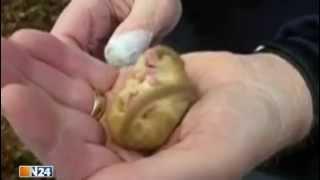 Nicht lachen! - Die Top 5 der besten Tiervideos im Netz