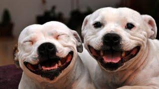 Приколы про животных самые смешные Видео приколы про животных
