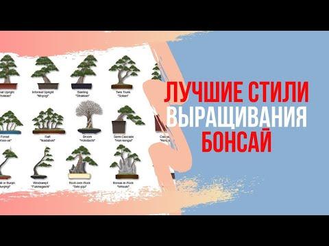 Основные стили Бонсай. Выращивание бонсай в домашних условиях