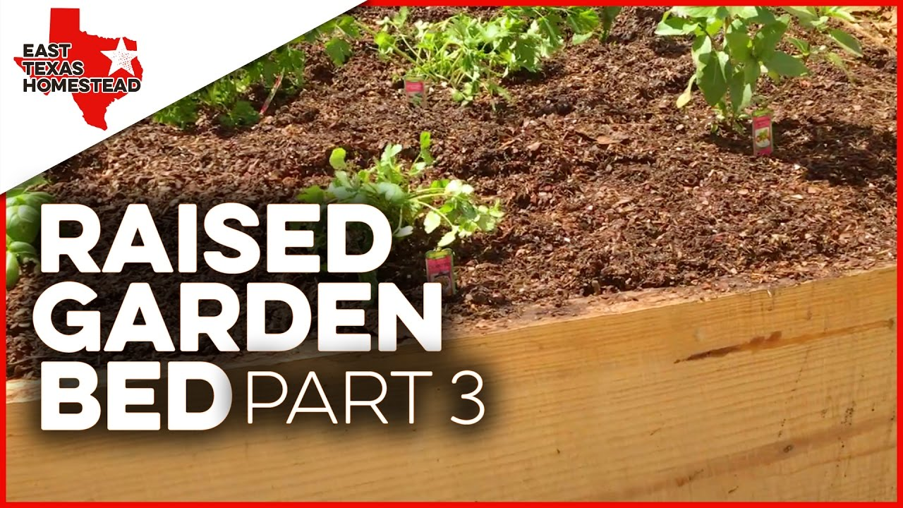 Building a Raised Garden Bed With Wood Sides From a Pine Tree - DIY Raised  Garden Bed - Part 3