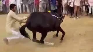 Красивый танец лошади/ песня кызыл орик