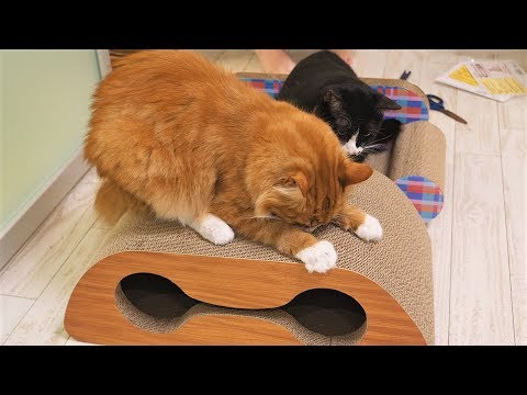 Our cats get new scratchboard beds and SPOILER they like them