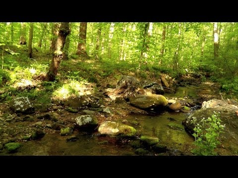 60-minutes-of-binaural-woodland-ambiance-(nature-sounds-series-#6)-trickling-stream-&-birds-sounds