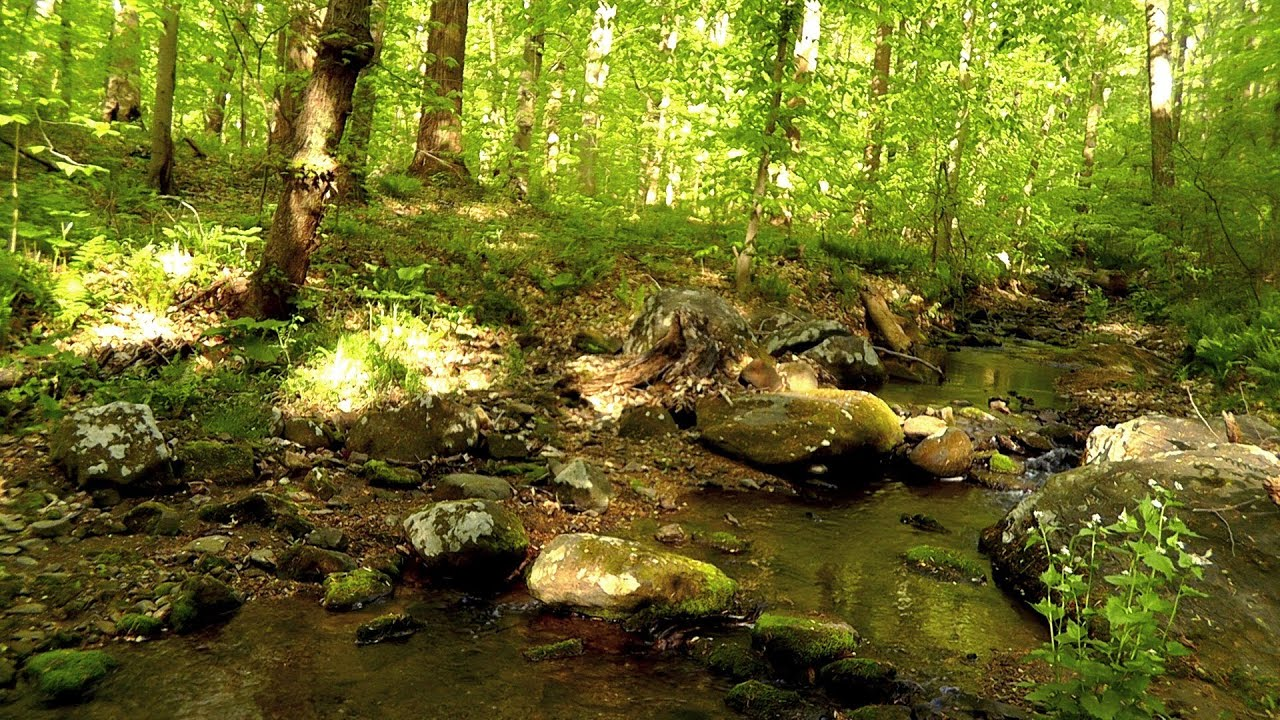 3d Scenery Wallpaper For Desktop 60 Minutes Of Binaural Woodland Ambiance Nature Sounds