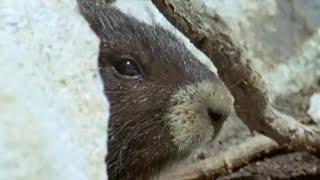 Waking up from Hibernation   Animals: The Inside Story   BBC