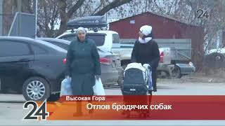 В Высокогорском районе намерены отловить всех бездомных собак