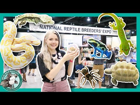 LET'S GET A NEW PET! // Daytona Reptile Breeders' Expo