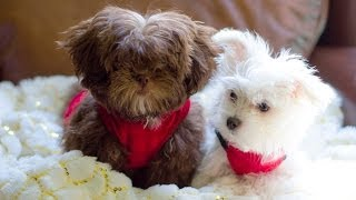 Cutest Puppies Ever Thumbnail