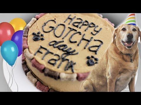 Dog Friendly Birthday Cake! | Frank's 11th Birthday