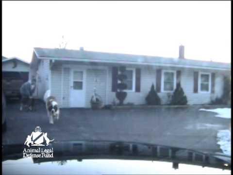 Frederick County Sheriff Deputy Shoots Maryland Family's Dog
