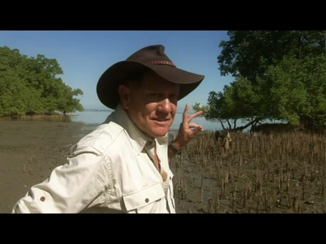 Treasure in Paradise The Wildlife Man TV Series