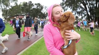 Register Now For Rspca Million Paws Walk 2015!