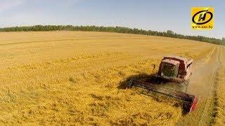 Республиканское селекторное совещание у Президента по вопросам уборки зерновых
