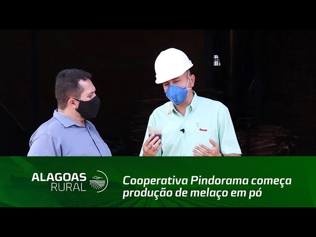 Cooperativa Pindorama começa produção de melaço em pó