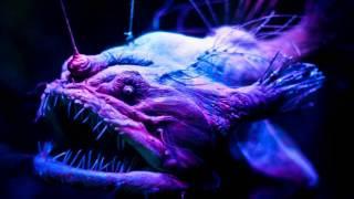 #7 Морской черт / Angler