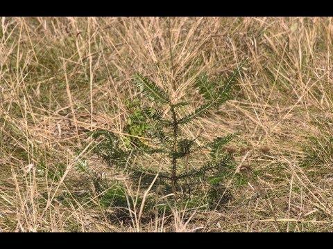 mistotvpoltava: Викорчуваний парк у Горбанівці