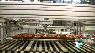 VISCON Центр Обработки Фруктов и Овощей