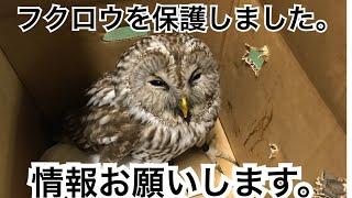 12月15日19時 渋谷区神泉町でフクロウを保護しました。