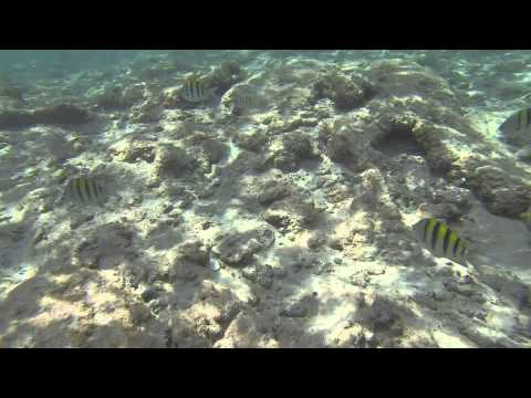 Snorkel Riviera Maya 2014