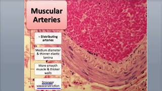 9-2 Arteries and Arterioles