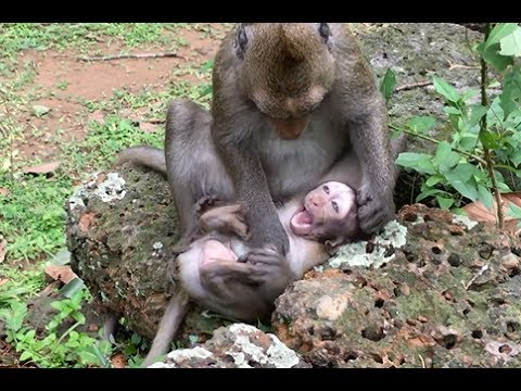 Thumbnail: Poor baby monkey was bitten, Wish baby run away from his