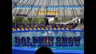 Dolphin show - НЕ ПРОПУСТИТЕ! Шоу в дельфинарии Акварель 25 08 2016